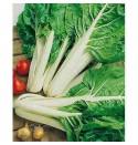 Acelga verde penca blanca ecológica 10g