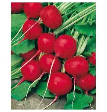Rabanito redondo rojo ecológico 8g