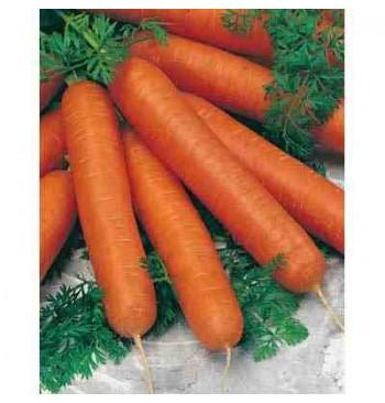 Zanahoria Nantesa 3 ecológica