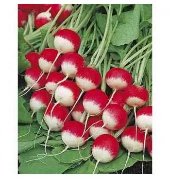Rabanito redondo rojo punta blanca ecológico 8g