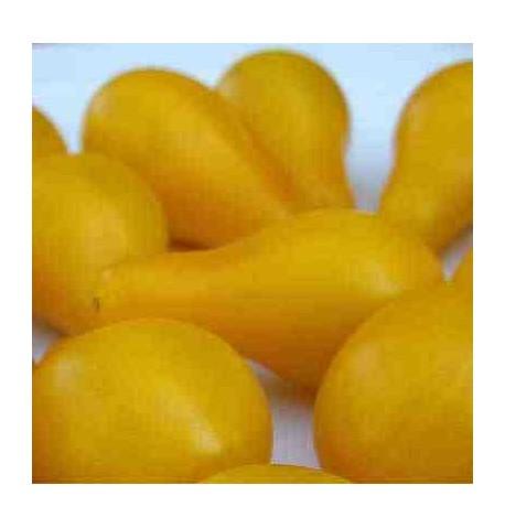 Tomate bombeta amarillo ecológico