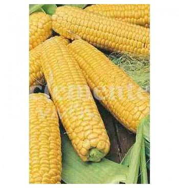 Maíz dulce Golden Batam ecológico 10g