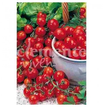 Tomate Red Cherry (cereza) ecológico 1g
