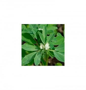 Fenogreco ecológico 60g