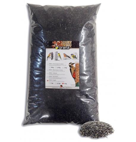 Negrillo, semillas para jilgueros