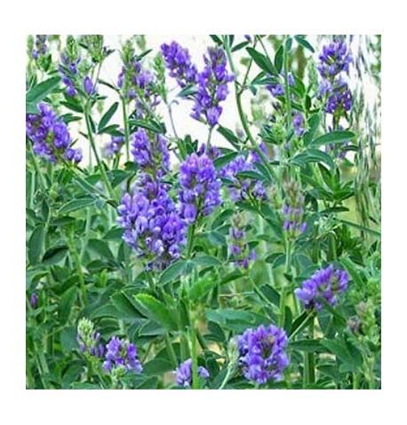 Alfalfa ecológica 5kg