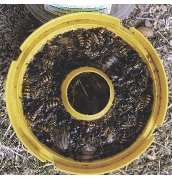 Cebo para avispa y mosca (60 días)