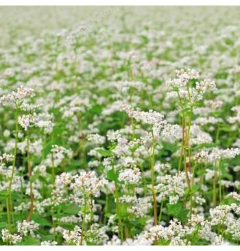 Trigo sarraceno o alforfón ecológico (Fagopyrum esculentum) 25kg