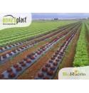 Acolchado biodegradable Enviroplast® Negro 1,2x100m