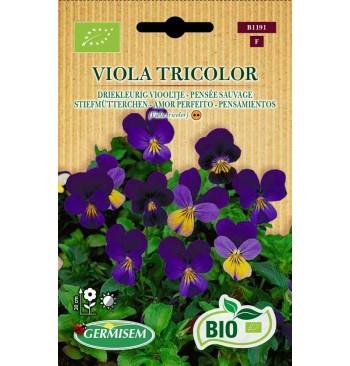 Pensamientos (Viola tricolor) ecológicos