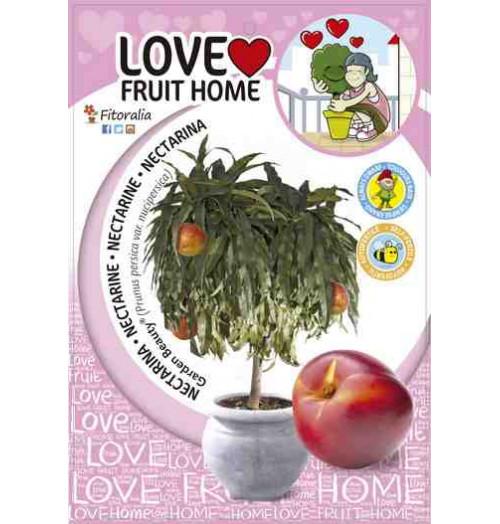 Nectarino enano Garden Beauty - Maceta 5L