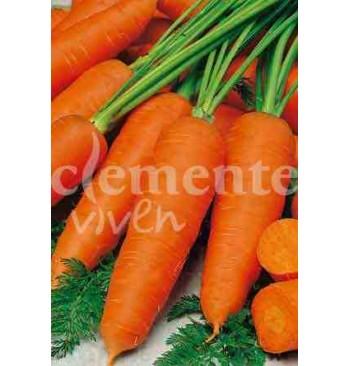 Zanahoria Chantenay
