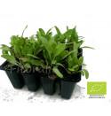 Plantel hortalizas
